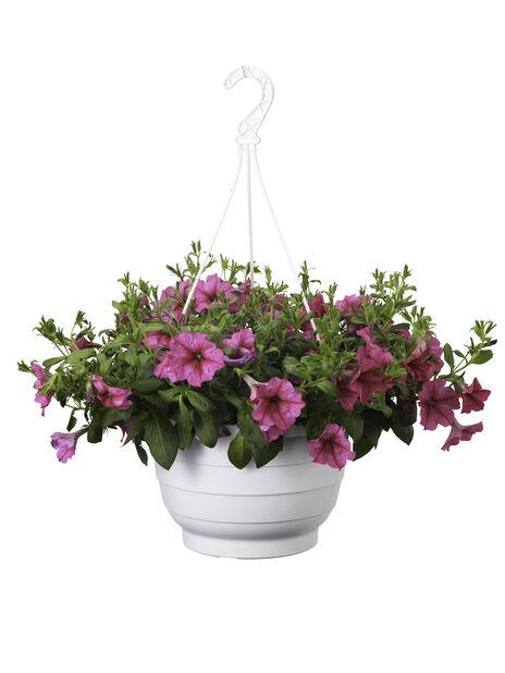 Petunia amppelissa, Ø25 cm, Pinkki
