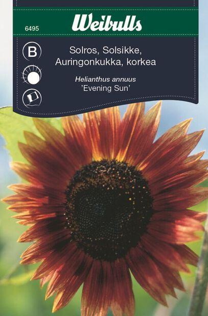 Auringonkukka 'Evening Sun'