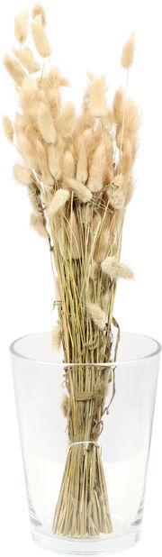 Jänönhäntä luonnonvärinen , Korkeus 50 cm, Valkoinen
