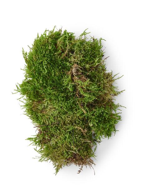 Sammal, Korkeus 25 cm, Vihreä