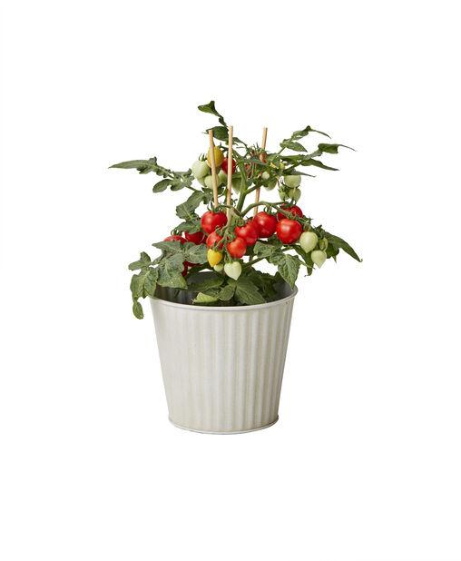 Kirsikkatomaatti, Ø10.5 cm, Punainen