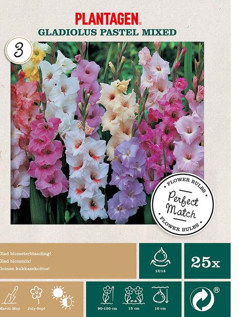 Gladioluslajitelma pastelliväreissä , Monivärinen