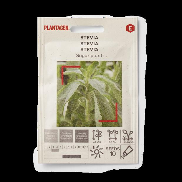 Stevia 'Sugar plant'
