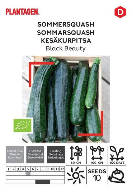 Kesäkurpitsa 'Black Beauty'