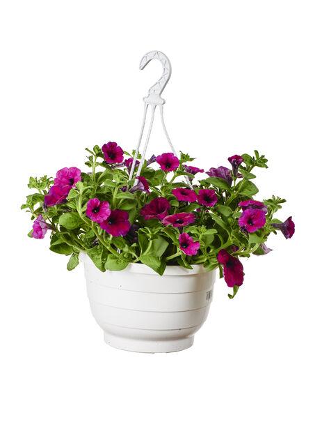 Petunia amppelissa, Ø25 cm, Violetti