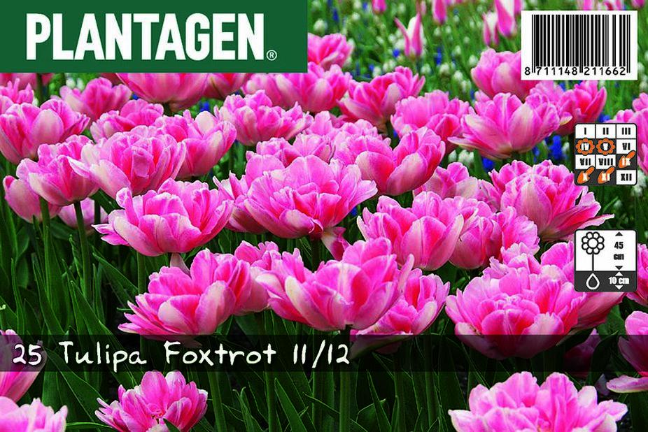Tulppaani 'Foxtrot', Useita värejä
