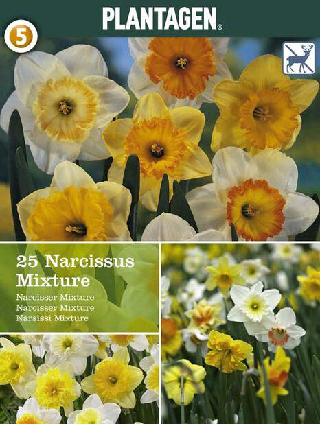 Narsissi mix, Useita värejä