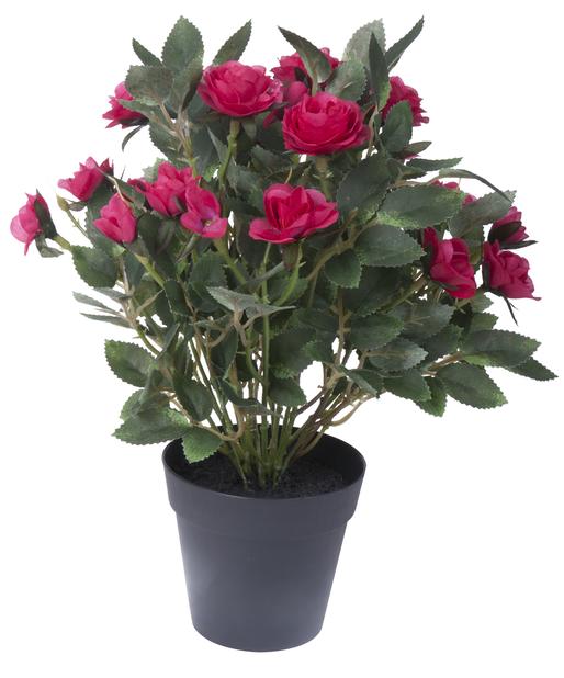 Ruusu tekokasvi, Korkeus 30 cm, Valkoinen