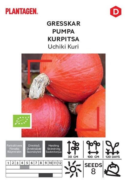Kurpitsa 'Uchiki Kuri'