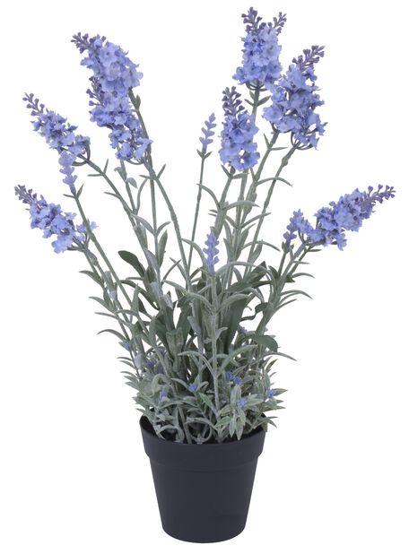 Laventeli tekokasvi, Korkeus 40 cm, Violetti