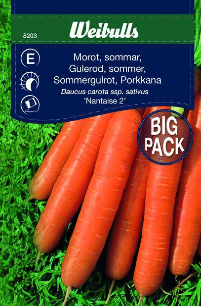 Porkkana 'Nantaise 2'