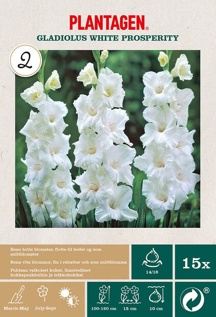Suurikukkainen gladiolus 'White Prosperity', Valkoinen