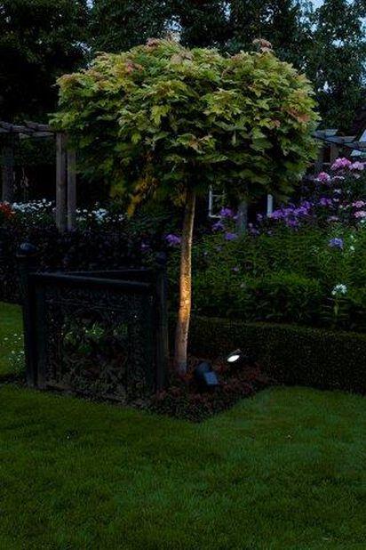 Aurinkokennovalaisin Lazise, Korkeus 35 cm, Musta