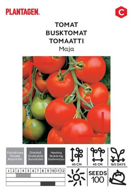 Tomaatti 'Maja'