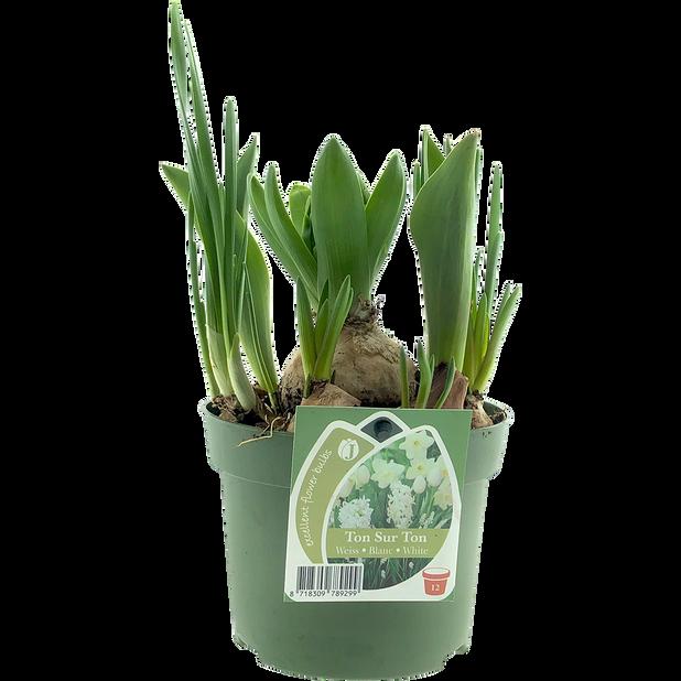 Kukkasipuliruukku, Ø12 cm, Monivärinen