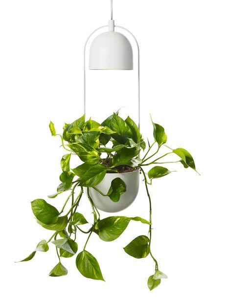 Alora-kasvilamppu Ø18 cm