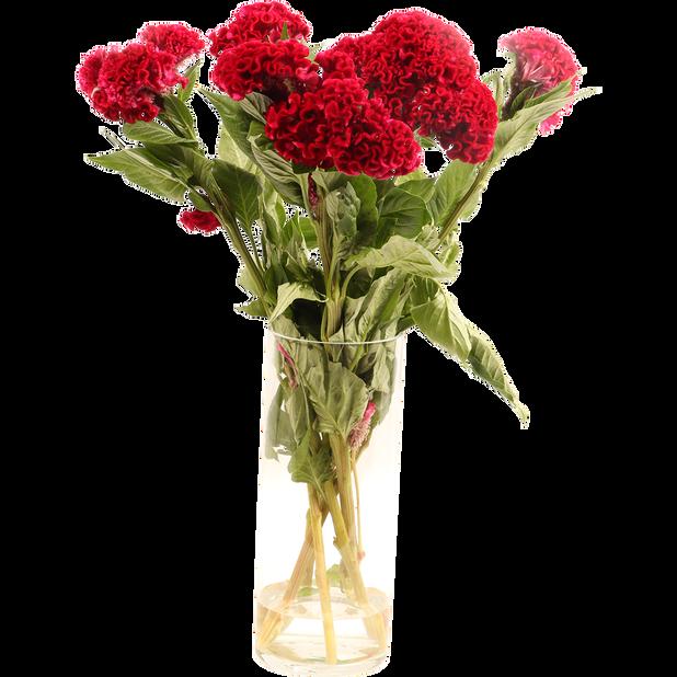 Kukonharja, Korkeus 50 cm, Useita värejä