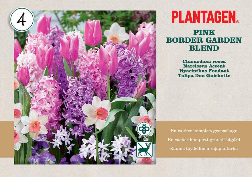 Kukkasipulilajitelma 'Pink Blend'