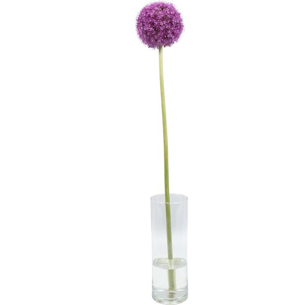 Allium, Korkeus 60 cm, Useita värejä