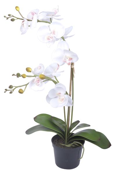 Orkidea ruukussa, K65 cm, valkoinen, tekokasvi