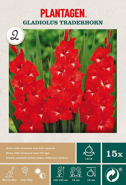 Suurikukkainen gladiolus 'Traderhorn', Punainen