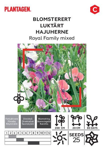 Hajuherne 'Royal Family Mixed'