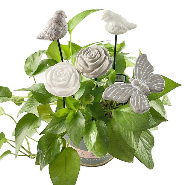 Ruusu-koristetikku, Korkeus 30 cm, Valkoinen