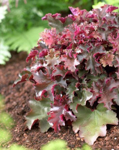 Keijunkukka , Ø11 cm, Punainen
