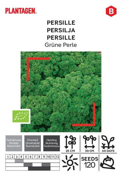 Persille 'Grüne Perle'