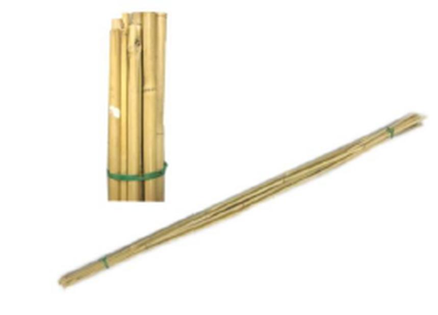 Kukkakeppi Bambu , Korkeus 150 cm, Beige