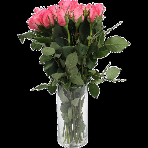Ruusunippu, Korkeus 40 cm, Useita värejä