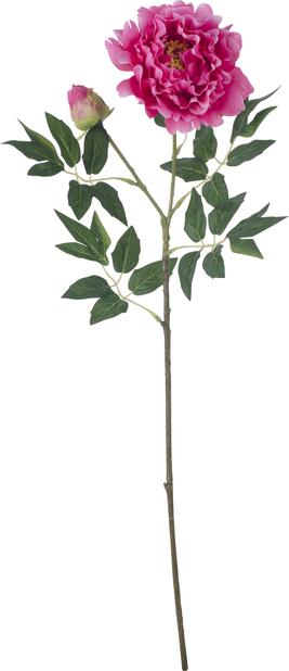 Pioni tekokasvi, Korkeus 61 cm, Pinkki
