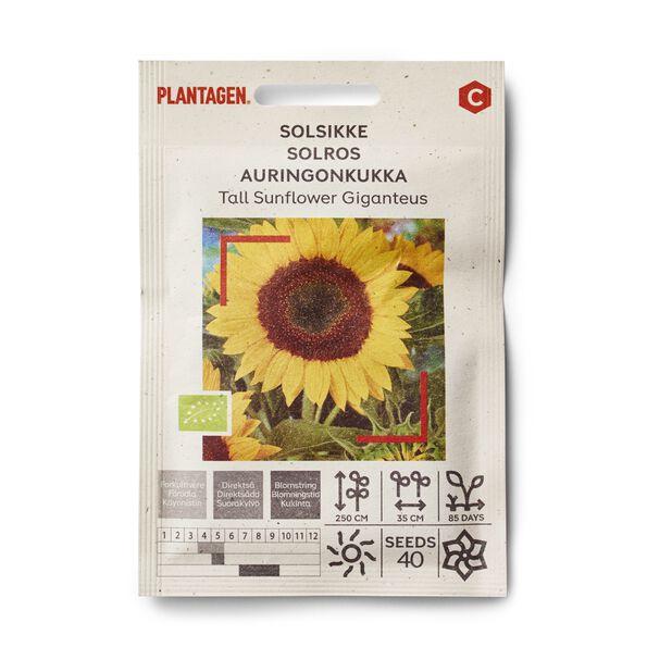 Auringonkukka 'Tall Sunflower Giganteus'