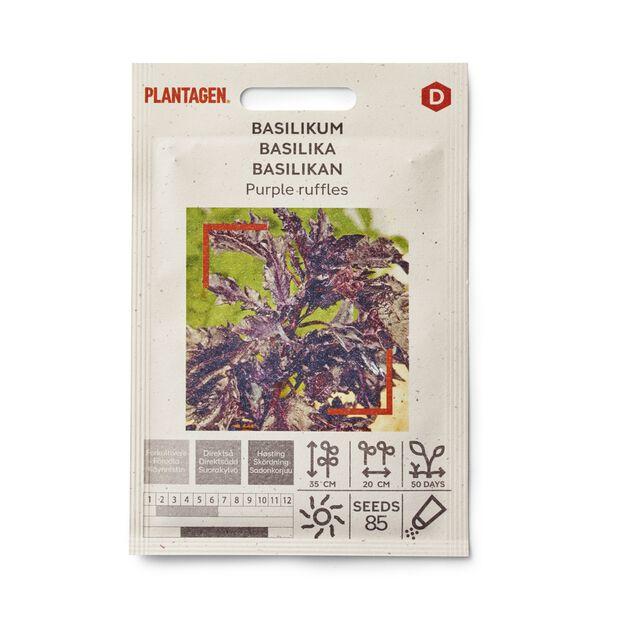 Basilikan 'Purple ruffles'