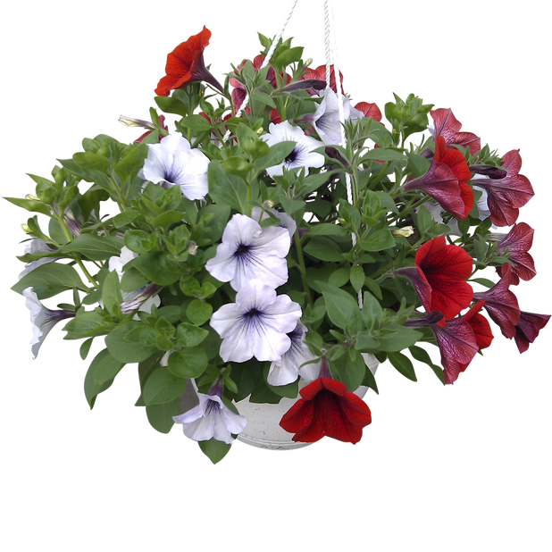 Petunia, Ø25 cm, Monivärinen
