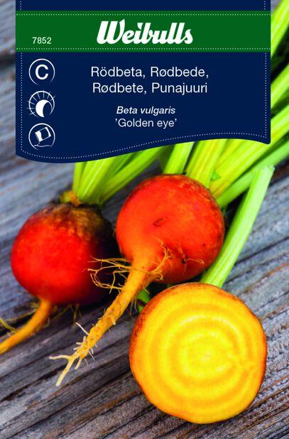 Punajuuri 'Golden Eye'