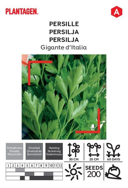 Persilja 'Gigante d'Italia'
