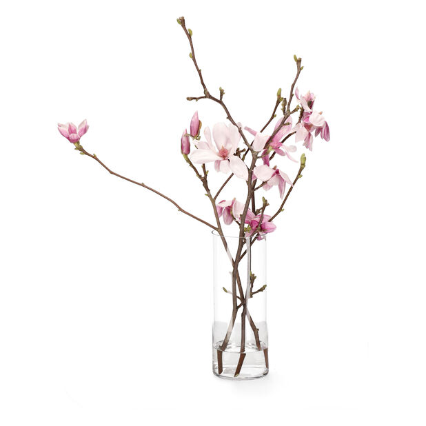 Magnoliat, Korkeus 60 cm, Useita värejä