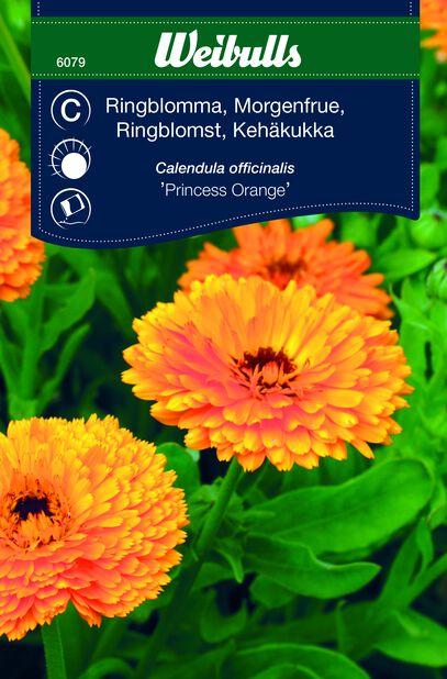 Kehäkukka 'Princess Orange'