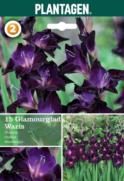 Gladiolus glamourglad Waris