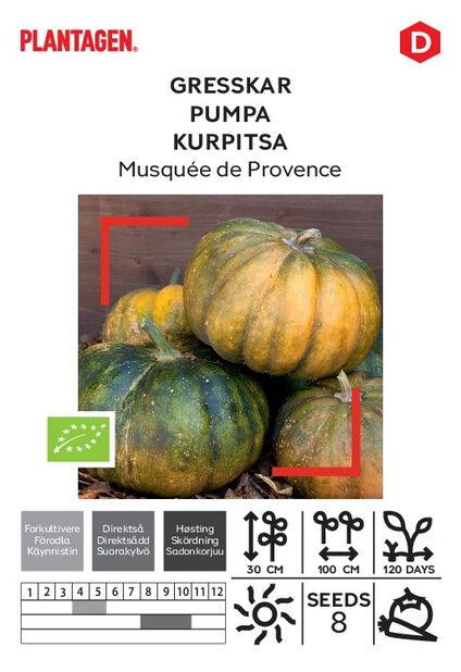 Kurpitsa 'Musquée de Provence'
