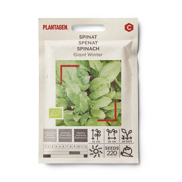 Spinach 'Giant Winter'