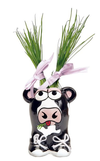 Pieni ruukku koristeruoholla Munakuppi Lehmä, Musta
