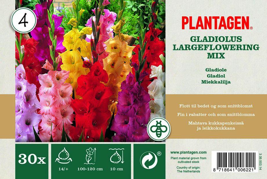 Suurikukkainen gladioluslajitelma, Monivärinen