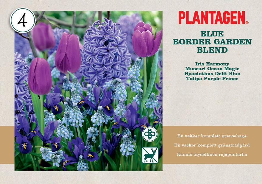 Kukkasipulilajitelma 'Blue Blend'