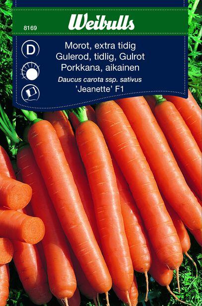 Porkkana 'Jeanette' F1