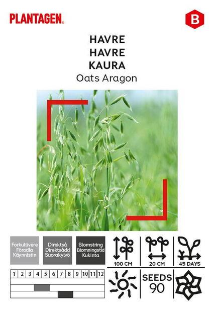 Kaura 'Oats Aragon'