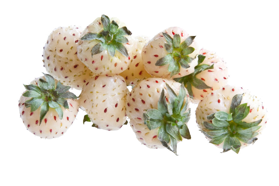 Mansikka 'Ananas White'