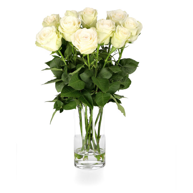 Ruusut premium Fairtrade 10-pakk, Korkeus 50 cm, Valkoinen