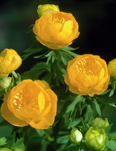 Kullero , Ø19 cm, Oranssi